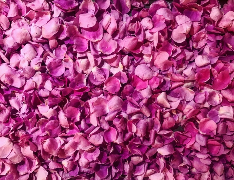 lovely image full of pink rose petals