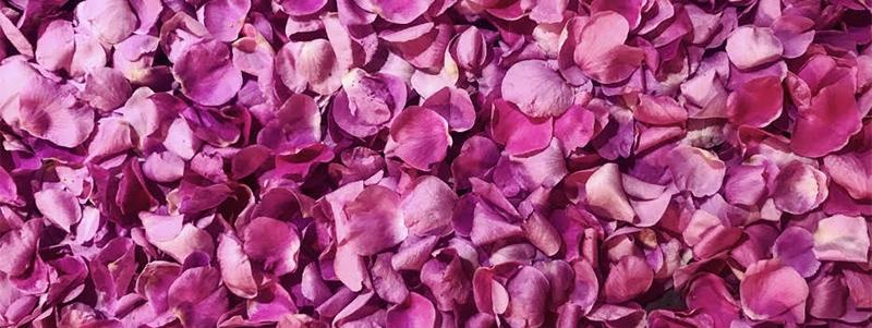 image full of pink rose petals